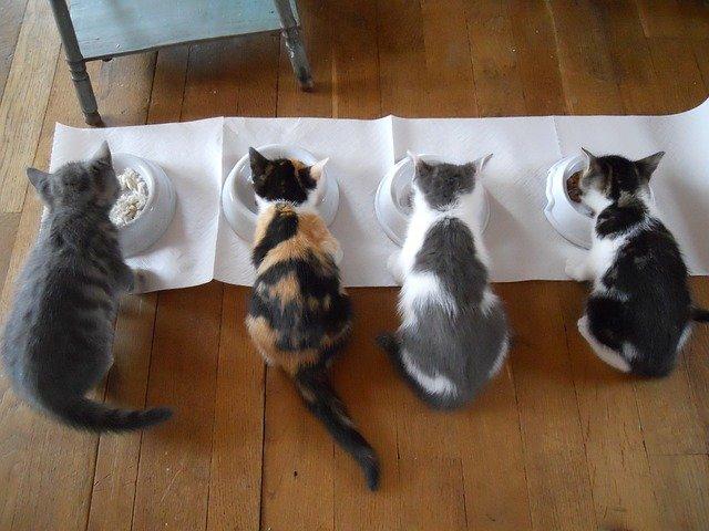 krmení koček