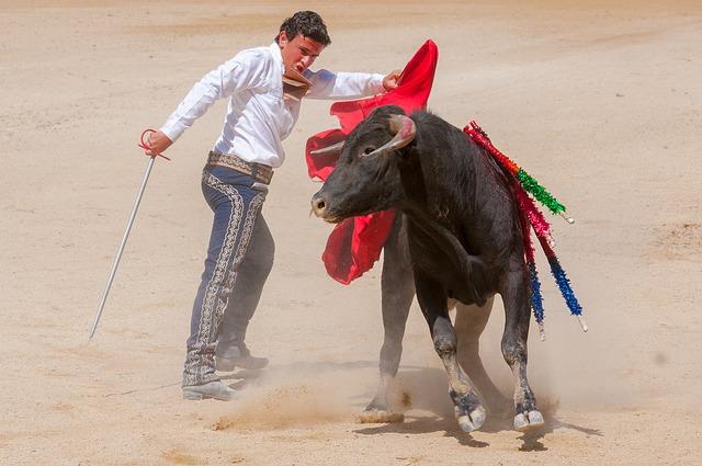 toreador s býkem