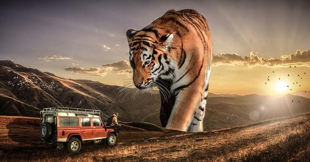 tygr a auto