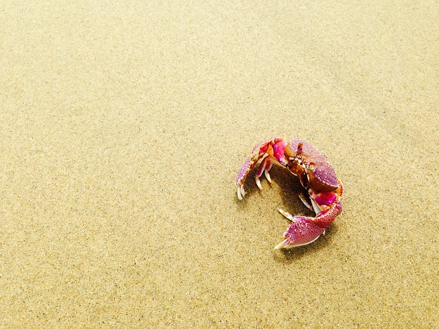 písek u moře